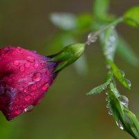 Под осенним дождем :: Татьяна Соловьева