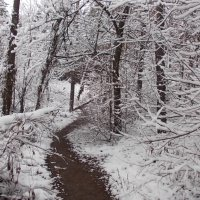 Зимняя тропа :: Викторина Срыбна