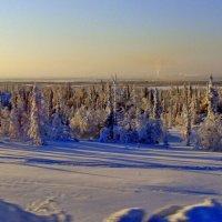 По дороге на Горнокнязевск :: Tata Wolf