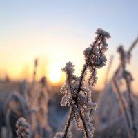 Зимние украшения :: Ольга