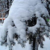 В зимнем наряде :: Елена Семигина