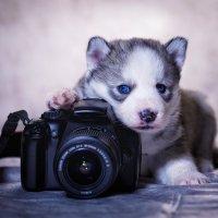 Юный фотограф :: Юра Викулин