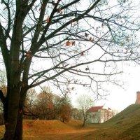 Осенняя медь :: Maryana Petrova