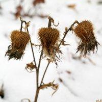 Когда колючий ветер ноября колышет мертвые колючки.. :: Андрей Заломленков