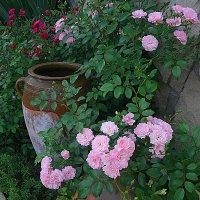 Миниатюрные розы :: svetlana.voskresenskaia