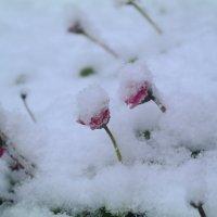 Первый снег :: Татьяна Носова