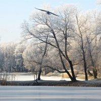 пробная зима в ноябре :: Елена