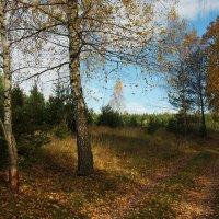 Осенний лес :: Сергей ***