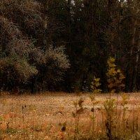 Осень приходит без спроса.. :: Ирина Сивовол