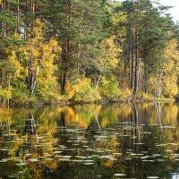 Карельское озеро. :: Наталия Владимирова