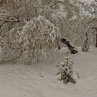 Снежное покрывало в зиму... :: Сергей Герасимов