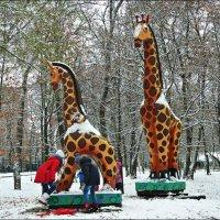 А вы видели жирафа в снегу? :: Надежда