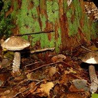 в сентябрьском лесу :: Александр Прокудин