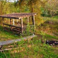 утро на берегу реки :: vg154