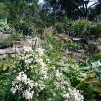 Альпийская горка.Ботанический сад. :: Жанна Викторовна