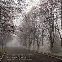 туман.. :: Надежда Шемякина