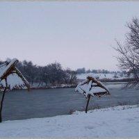 """""""Пальмы"""" на берегу пруда... :) :: Любовь К."""