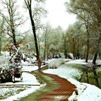 Первый ноябрьский снег идет. :: donat