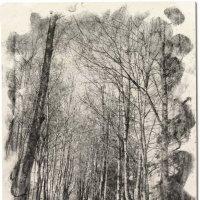 Я в весеннем лесу..... :: Tatiana Markova