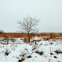 Одинокое древо. :: Daniel Surov