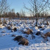 Зима идет :: Николай Танаев