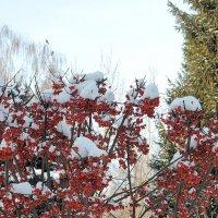 Яркие краски уходящей осени, в Толгском монастыре :: Николай Белавин