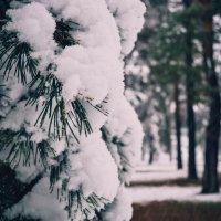 Первый день зимы :) :: Юлия Шевцова