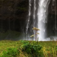На фоне водопада :: Shapiro Svetlana