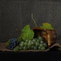 Что сказать про виноград? :: Наталья (D.Nat@lia) Джикидзе (Берёзина)