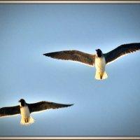чайки2 :: Denis Lipatov