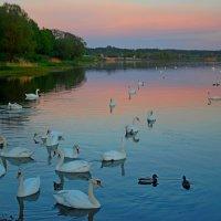 Городские птицы :: Teresa Valaine