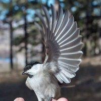 Серебряное крыло :: Анатолий Иргл
