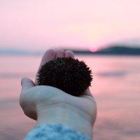 Морской ёжик и закат )) :: Дарья Бурмистрова