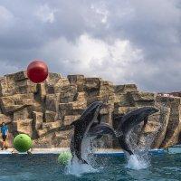 Батумский дельфинарий. :: Станислав