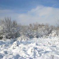 Зима :: Анатолий Томас