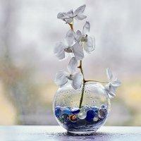 Увядание Орхидеи. :: Тамара Бучарская