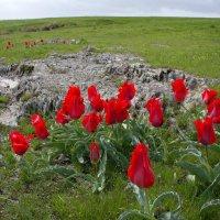 и на скалах растут цветы... :: vladimir polovnikov
