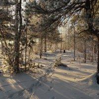 Зима пришла на Ямал.. :: Леонид Балатский