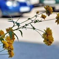 Городские цветы... :: Алексей Бубнов