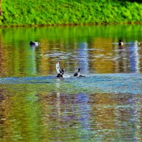 Птичьи забавы... :: Sergey Gordoff