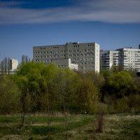 Утопающий в зелени :: Владимир Кроливец