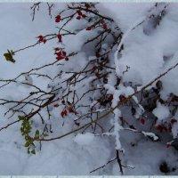 Снег, да снег кругом... :) :: Любовь К.