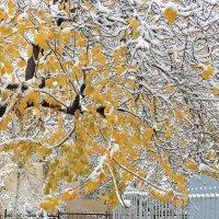 2 декабря - первый снег в Ташкенте :: Светлана