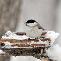 В снежный день. :: Алексей .