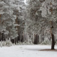 У нас снова зима. :: Евгений Мельников