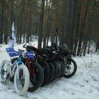 При наступлении холодов толстоколёсники сбиваются в стаи :: Евгений Бурындин