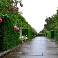 Дождь в Датском королевстве :: Ольга