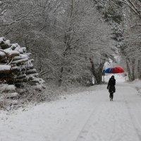 К нам пришла зима. :: Ирина ...............