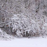 В снежном наряде :: Татьяна Ломтева