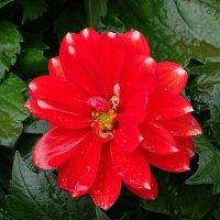 Городские цветы :: Милешкин Владимир Алексеевич